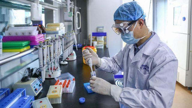 Investigadores de Japón desarrollan un test de anticuerpos de Covid-19 usando gusanos de seda