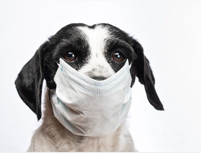 Canadá: Primer perro en dar positivo para COVID-19
