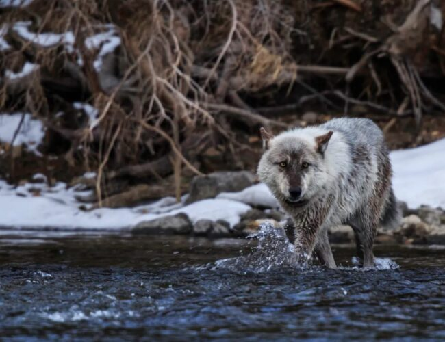 Las 10 buenas noticias para la vida silvestre en 2020