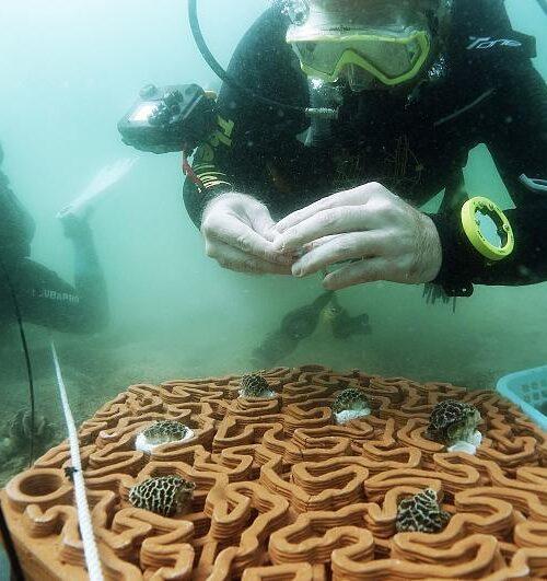La impresión 3D está ayudando a los arrecifes de coral de Hong Kong