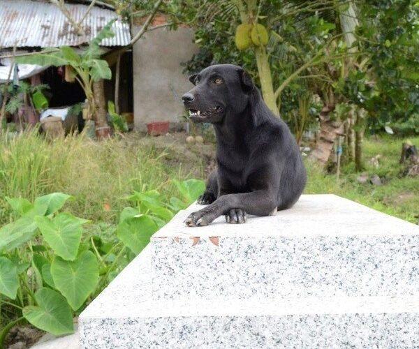 Mino, la mascota que no abandona la tumba de su amigo de dos años