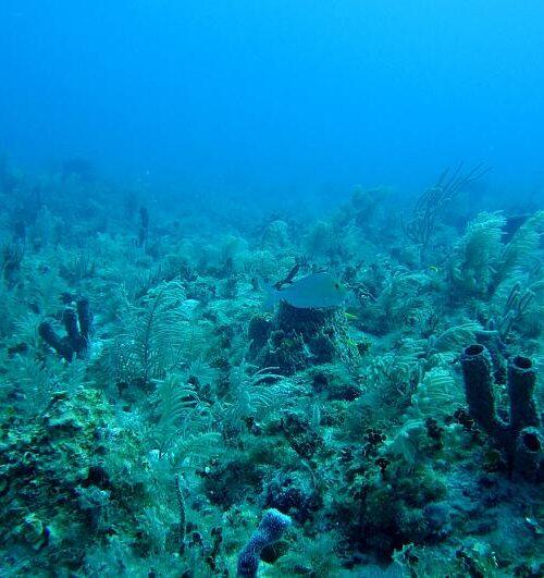 Cura del Covid-19 podría estar en el fondo del océano