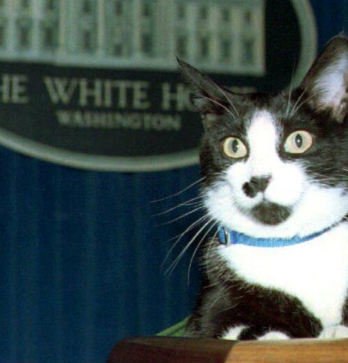 Hoy se celebra el Día Internacional del Gato