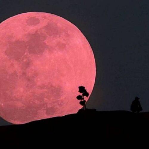 La Superluna Rosa 2021 – La luna llena brillará de manera impresionante y será un 12% más grande de lo normal.