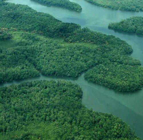 Cuatro migrantes fallecieron mientras cruzaban la selva del Darién para llegar a Panamá