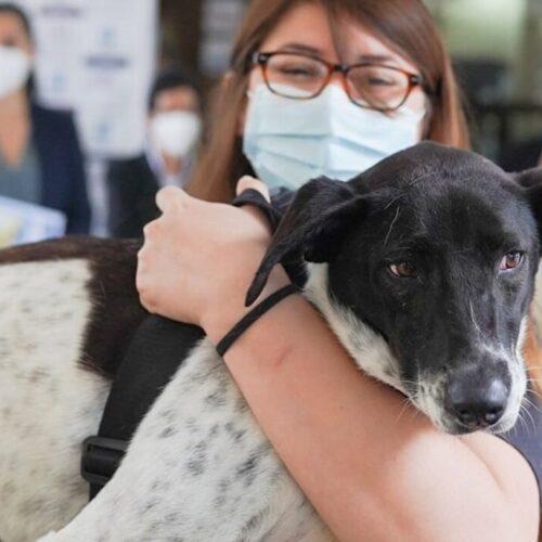 Al menos 75 personas recibieron vacunas caninas para coronavirus en Chile