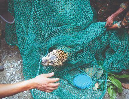 Video | Un leopardo entra en una casa en la India y provoca el pánico
