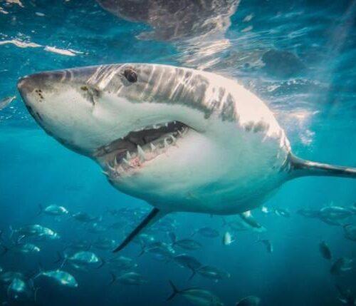 Hombre en Australia murió tras ser mordido por un tiburón mientras surfeaba