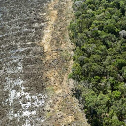 La Amazonía brasileña liberó más carbono del que absorbió en los últimos 10 años