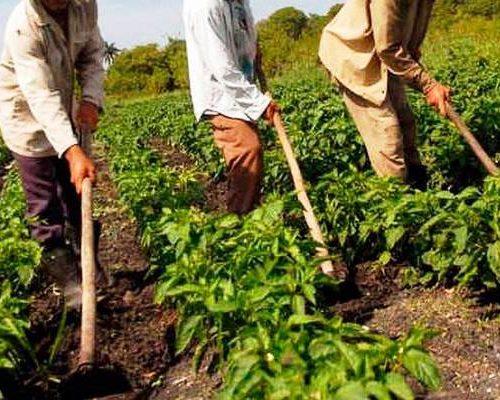 Mueren carbonizados dos productores agrícolas de Mérida en un accidente vial