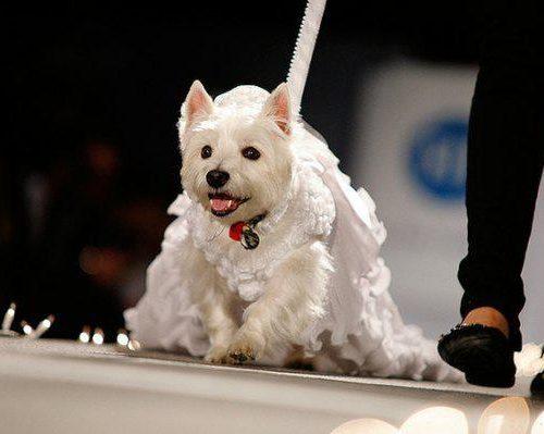 Abuelos en Miami disfrutaron de un desfile canino en el geriátrico