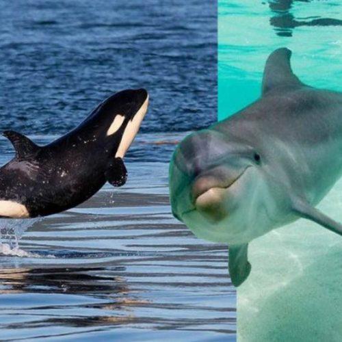 23 de Julio – Día Mundial de la Ballena y el Delfín