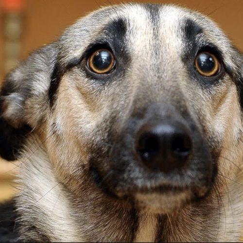 ¿Sabías qué si tu perro se queda sordo podría pensar que todo el mundo dejó de hablarle?