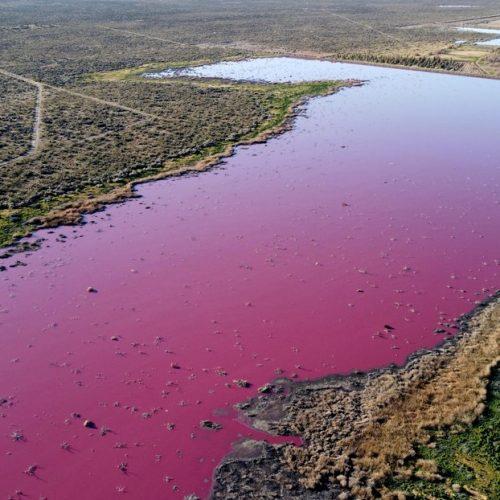 Residuos tóxicos tiñeron de rosa lagunas en la Patagonia argentina