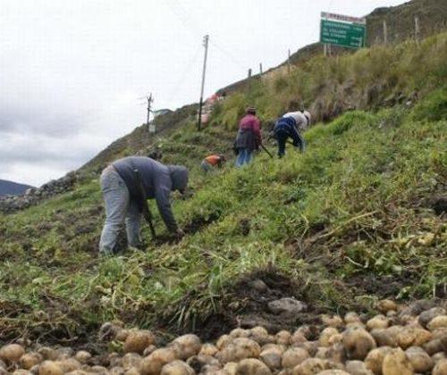 Mérida: Más de 10 mil productores agropecuarios están afectados por las lluvias