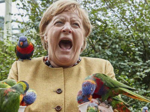 Canciller Angela Merkel visita el Parque de Marlow y rodeada por bandadas de loros