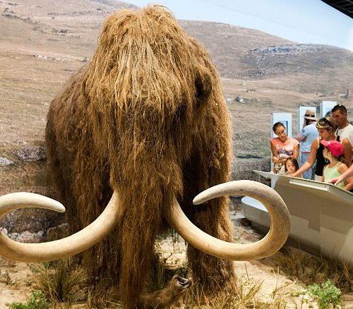 Científicos quieren revivir al mamut lanudo y acaban de conseguir US$ 15 millones para hacerlo realidad