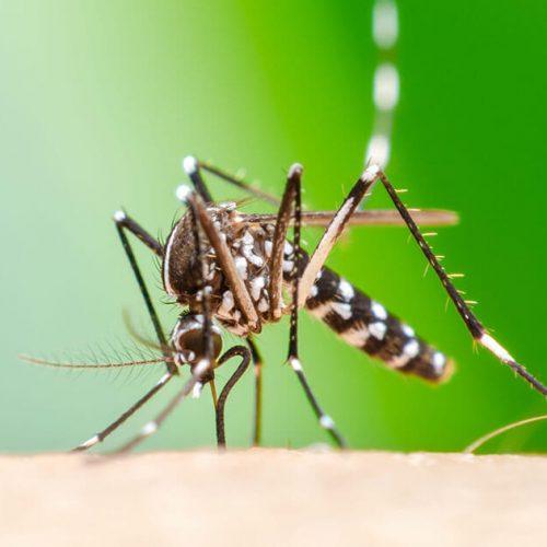 Vacuna contra el Chikungunya tiene éxito en pruebas con humanos
